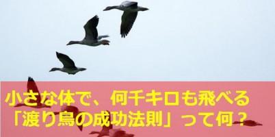 渡り鳥の法則