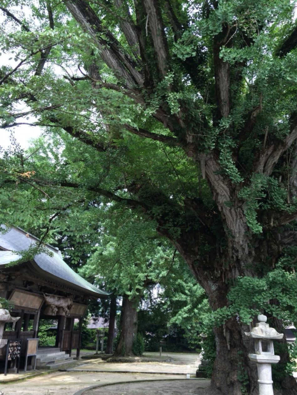 樹齢何百年