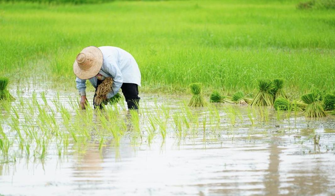 営業マン:農場の法則