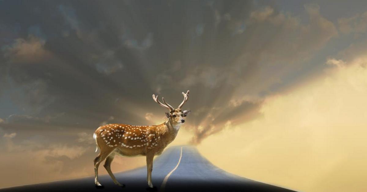 戦略的思考:高速道路の鹿